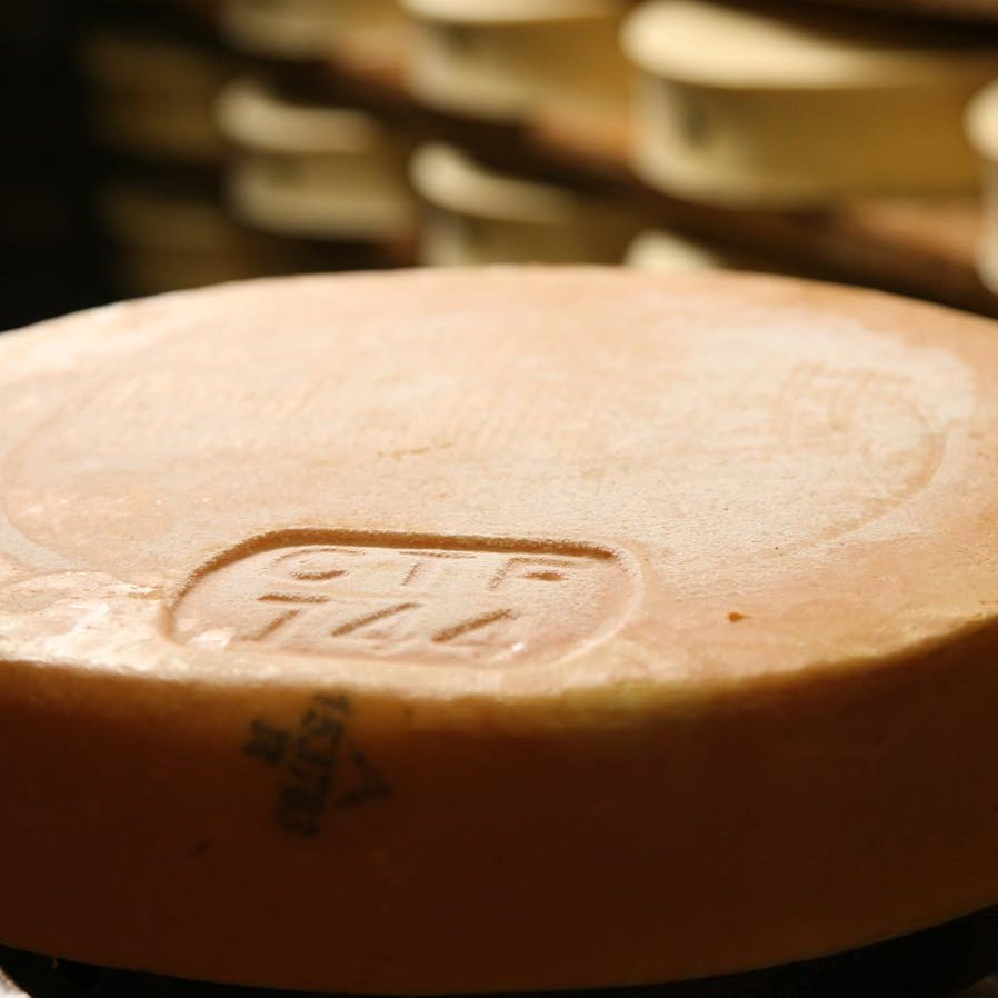 Fontina in fase di stagionatura